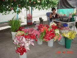 Hilo Flowers - leg 6