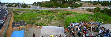 recon native plants volunteer ecoblogic page 3