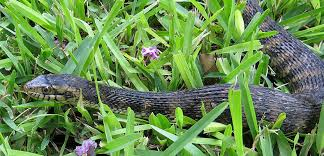 How To Avoid Snakes In Backyard How To Keep Snakes Out Of Your House Or Yard