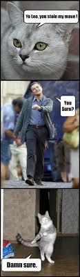 Strutting Leo Meme - cybergata more meme silliness longcat strutting leo and sad keanu