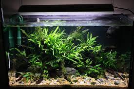 Substrate Aquascape New 80cm Re Scape Pics 16 06 10 Uk Aquatic Plant Society