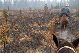 Wildfire Test Questions by Bc Wildfire Service Faces Questions From Ranchers At Clinton