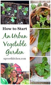 what to grow in a vegetable garden how to start an urban vegetable garden