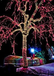 zoo lights denver zoo colorado a treat to be enjoyed only