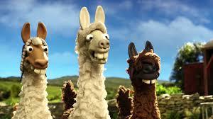 the llamas join shaun the sheep on the farm the farmer u0027s llamas