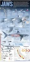 Florida Shark Attack Map Shark Attacks And The Truth About Sharks U2013 Orange County Register