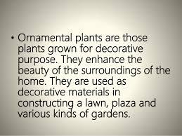 growing ornamental plants