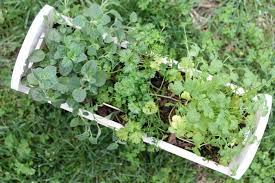 herbs planter herb planter best iron herb planter with herb planter excellent
