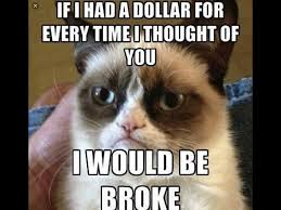 Grumpy Kitty Meme - some of my favorite grumpy cat memes album on imgur