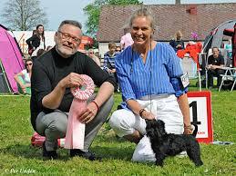 affenpinscher uppf are nordskånska kennelklubben internationell hundutställning 2016