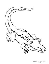Coloriages coloriage de crocodile  frhellokidscom