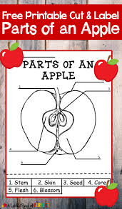 learning about apples color and label free printable