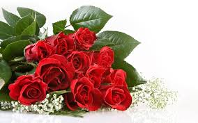 wallpaper flower red rose red rose flowers potted trees red roses and rose
