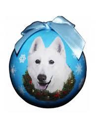 american eskimo dog nz white swiss shepherd