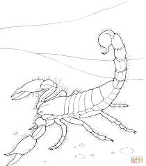 giant desert scorpion coloring page free printable coloring pages