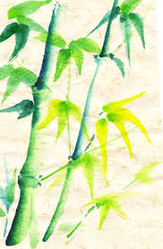 bamboo linda halcomb u0027s blog