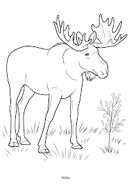 wild animals coloring pages for kids to print for free