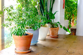 5 low maintenance plants that can purify the air in your home office