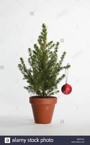 a small christmas tree decorated with one bauble stock photo