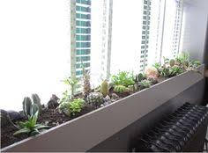 how to make a succulent window box window plants and box