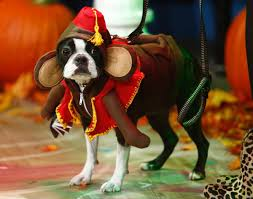 animals celebrate halloween photos animals celebrate halloween