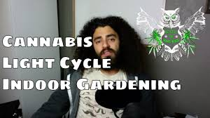 Light Cycle For Weed Marijuana Light Cycle What Makes Cannabis Flower How To Make