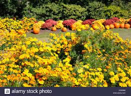 Botanical Gardens Dallas by Flowers Dallas Arboretum Stock Photos U0026 Flowers Dallas Arboretum
