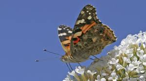 nature radar helps solve painted migration mystery