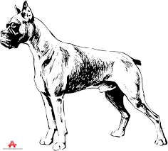 boxer dog black and white boxer dog drawing clipart free clipart design download