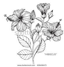 Flower Drawings Black And White - hibiscus stock images royalty free images u0026 vectors shutterstock