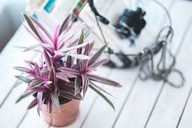 the best indoor plants the best way to take care of your indoor plants colliers news