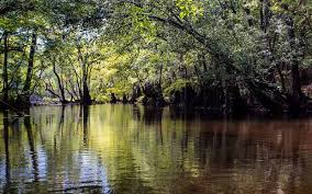 Florida rivers images 10 rivers in florida as beautiful as they are haunted by evil jpg