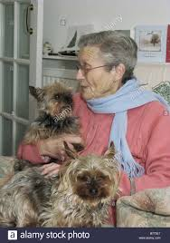 what to get an elderly woman for christmas elderly woman at christmas sitting with pet yorkies for stock