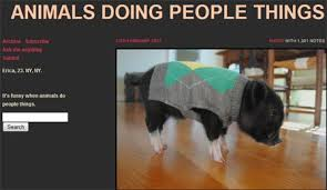 what does a pig in an argyle sweater have in common with a husky