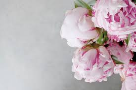 Peonies Delivery Flower Delivery Auckland Auckland Florist Same Day Delivery