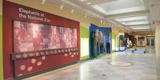 elephant trails exhibit smithsonian u0027s national zoo