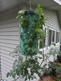 Upside Down Tomato Planter diy upside down tomato planter green mansions org