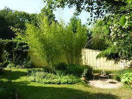 abri jardin bambou haie de jardin bambou meilleures idées créatives pour la