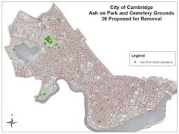 Emerald Ash Borer Map Emerald Ash Borer Public Works City Of Cambridge Massachusetts