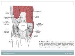 Lateral Patellar Ligament Biomechanics Of Knee Complex 9 Frontal Plane Patellofemoral Jt Stabil U2026