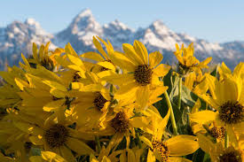 when to visit jackson hole guide to the seasons