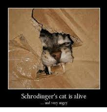 Angry Cat Good Meme - schrodinger s cat is alive and very angry alive meme on me me