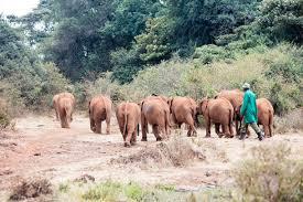 elephant spoken here