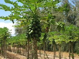 plants grow o u0027ahu
