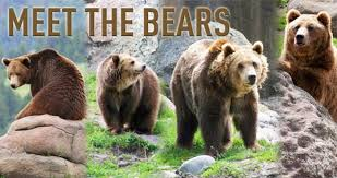 Animal Planet Documentary Grizzly Bears Full Documentaries - casey anderson montana grizzly encounter
