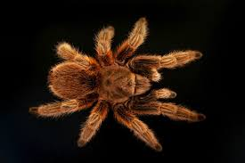 tarantulas complete care guide housing feeding species etc