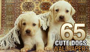 cute dog wallpapers 65 high resolution wallpapers of cute dogs wallpapers recipeapart