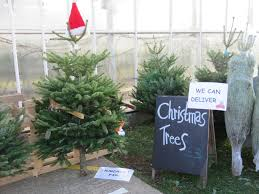 christmas tree for sale christmas christmas trees for sale the apuldram centre tree