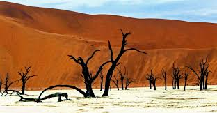 oregon the traveler images Sossusvlei dead forrest oregon budget traveler jpg