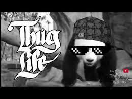Thuglife Meme - animals thug life compilation 3 youtube